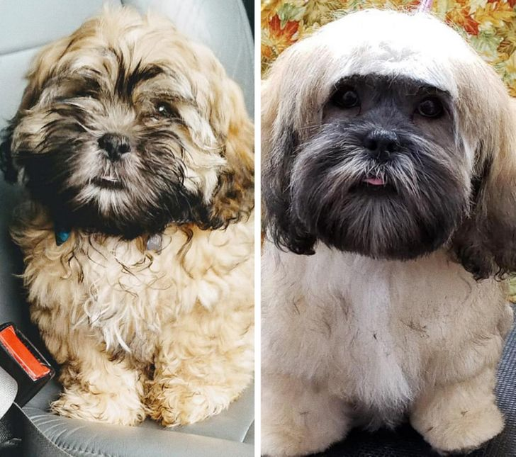 After grooming, this dog started to look like a fashionista