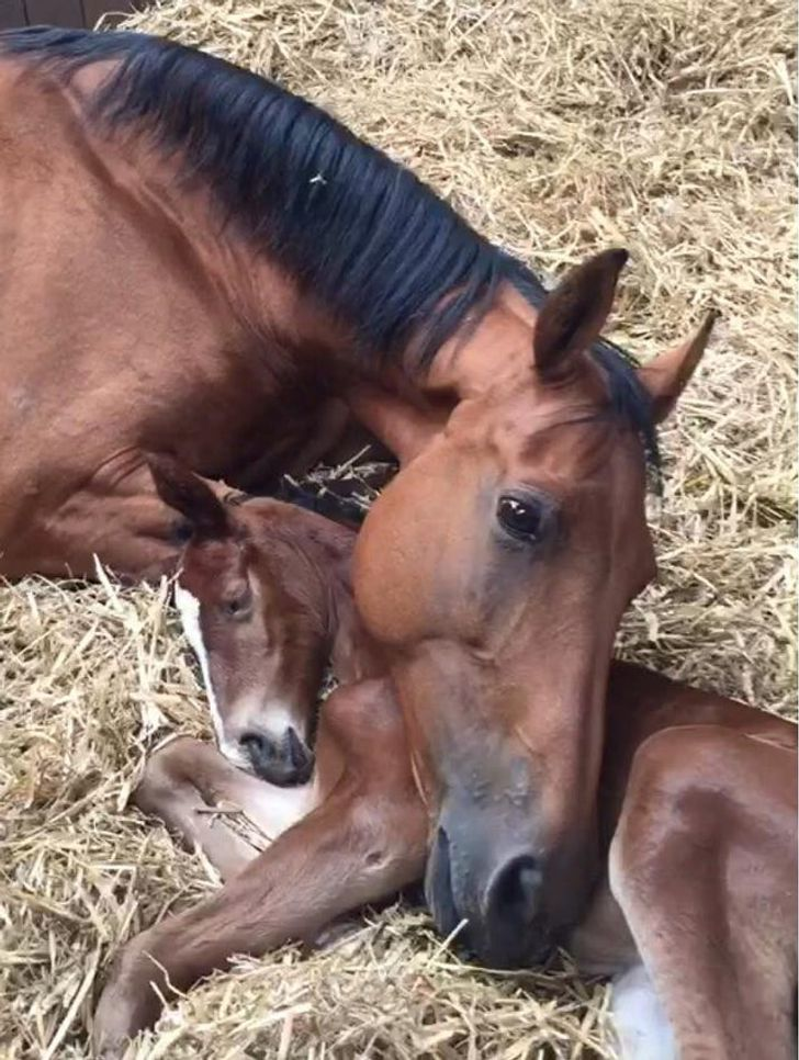 his mare lost her foal, and then 2 days later, this foal lost its mother