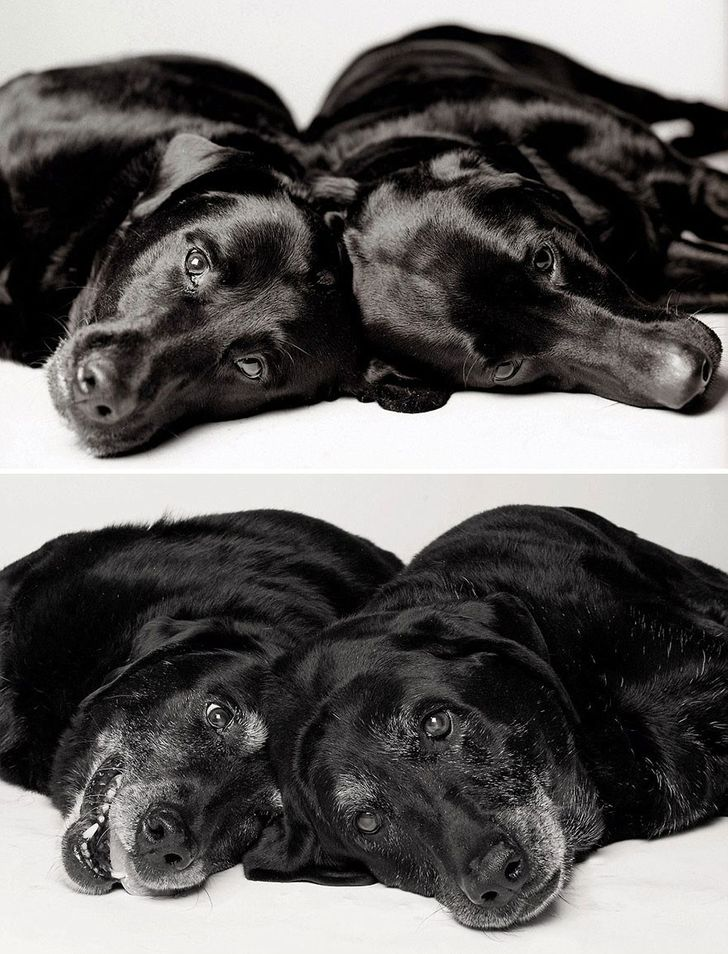 Maddie and Ellie — 7 and 6 years; 14 and 13 years