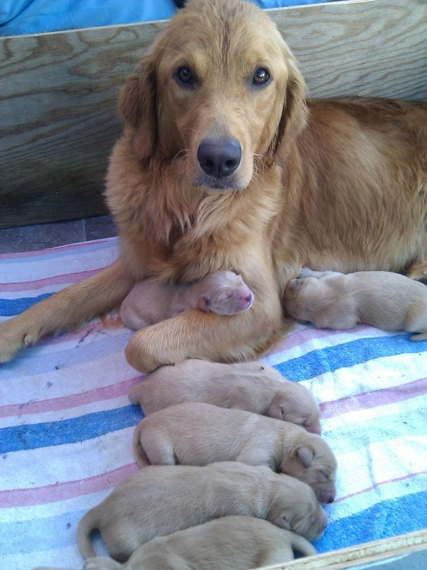 This mother is a trooper and deserves some well-earned rest