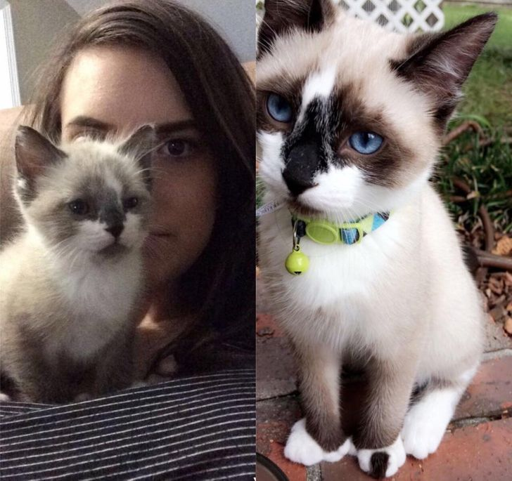 When I first rescued him and now! He and 4 other kittens were left in a city work truck