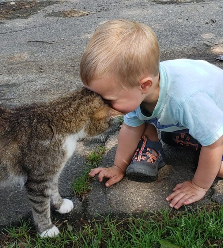 A boy meeting his first kitty — head bonks were had by all