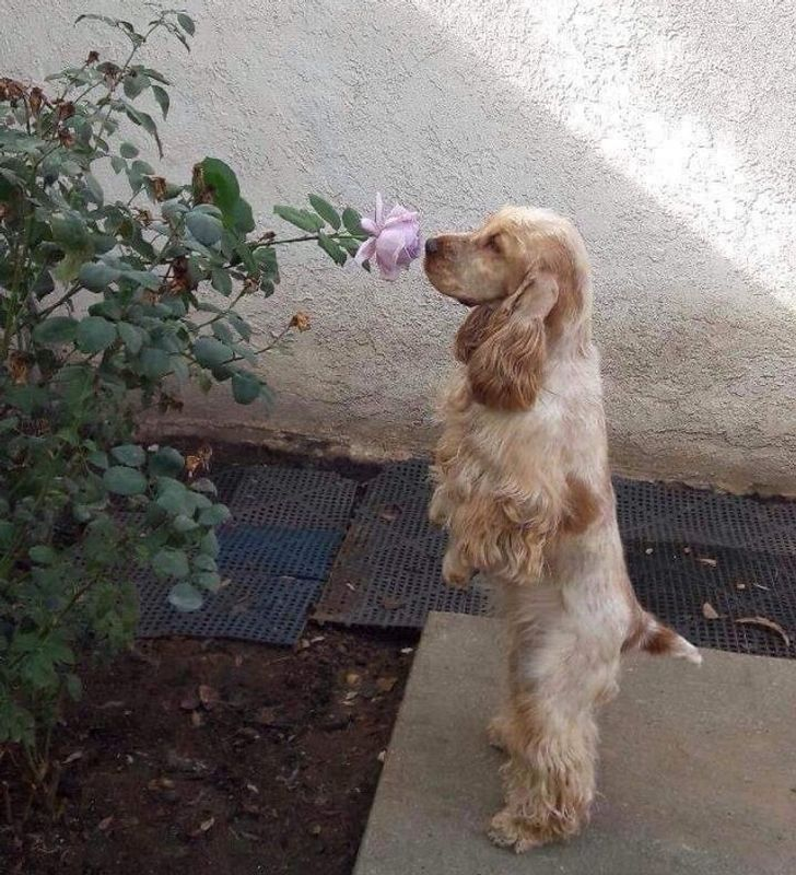 Was just taking a walk and thought I'd smell this flower