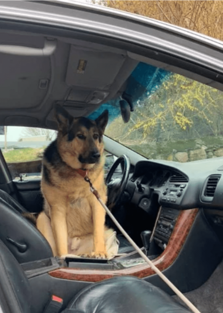 I will drive today, Hooman