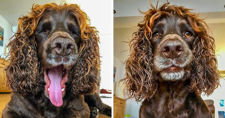 This dog could play a leading role in a Hollywood movie and win an Oscar
