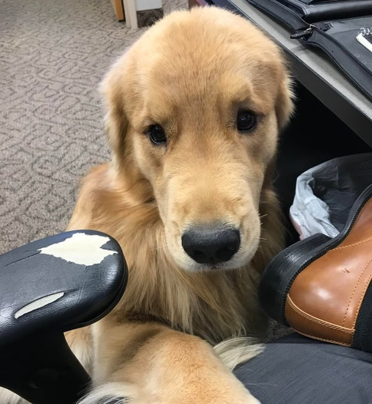 When you're having a ruff day at work, but the office doggo is there for you