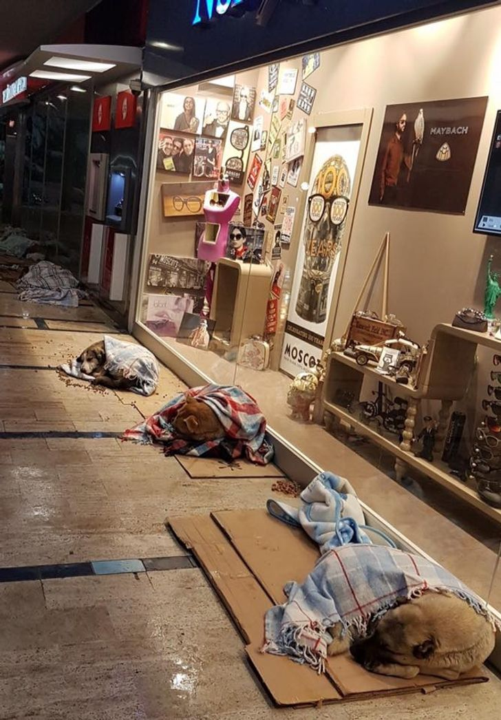 A Turkish mall owner lets stray dogs sleep inside during a snowstorm