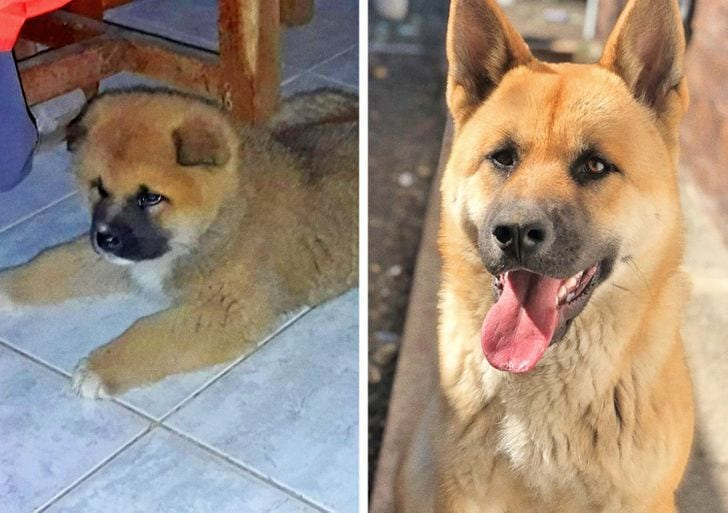 I was told that this was a chow-chow, and we didn't think he'd grow up to be so big