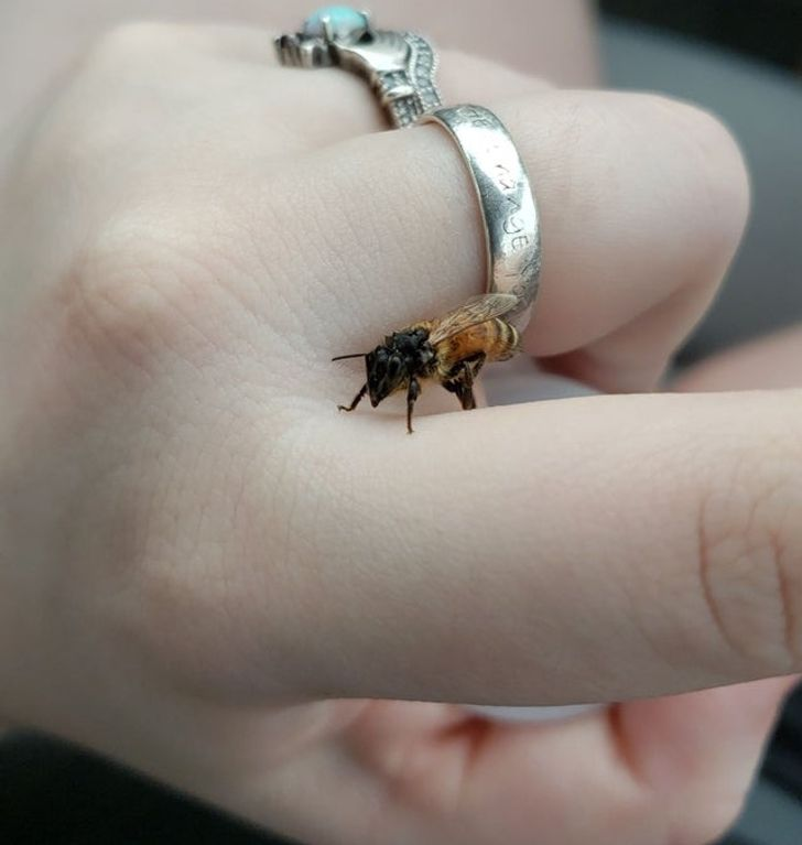 Found a wet honey bee in a parking lot