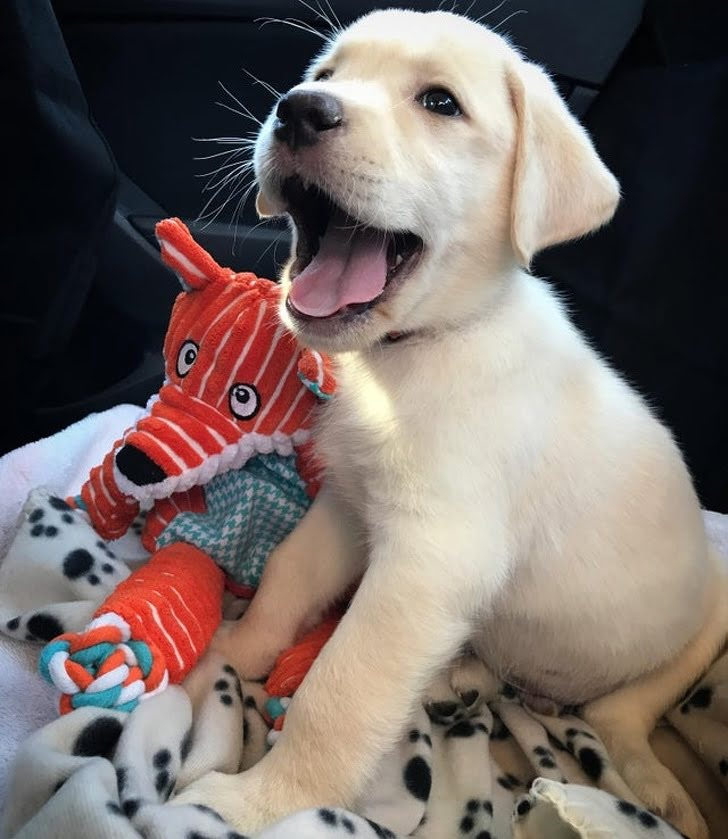 The happiness on his face after getting a forever home