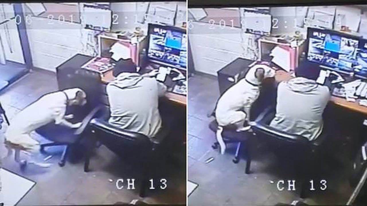 Dog Sees His Owner Working Alone, So He Pulls Up A Chair Beside Him
