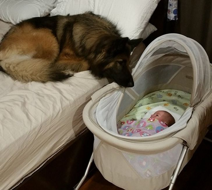 My friend's newborn is less than 3 days old but their dog is already in love with him