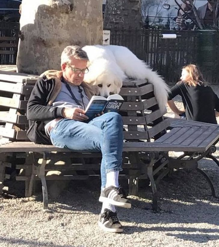 While all the other dogs inthe park were playing, hewas reading abook with his human.