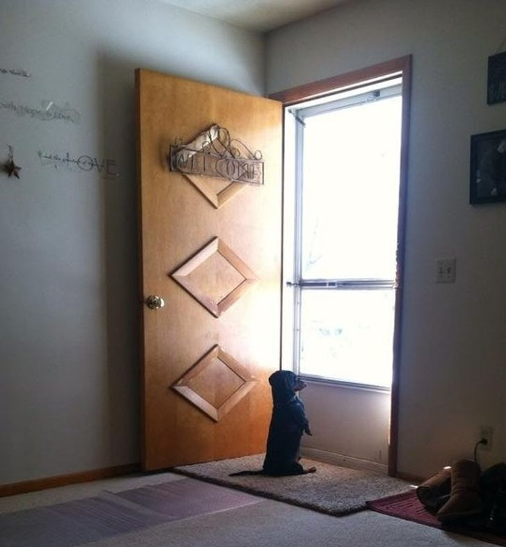 Myfriend's dog waiting for him toget home.