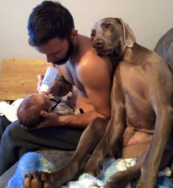 When your dogs have a rough day, they surely want to grab your attention