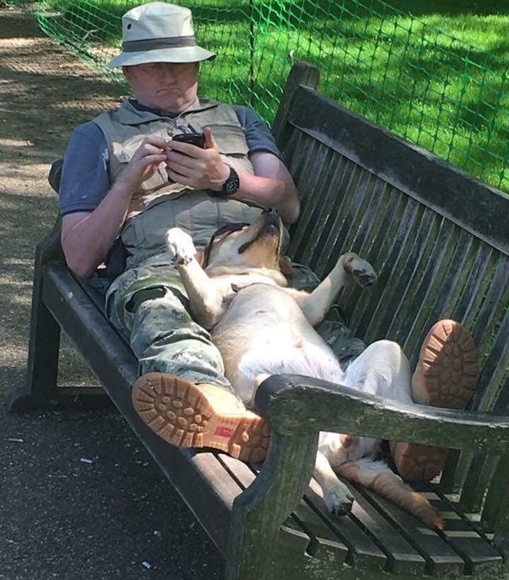The dogs love to chill with their humans in the park