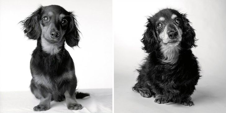 Lily — 8 months and 15 years