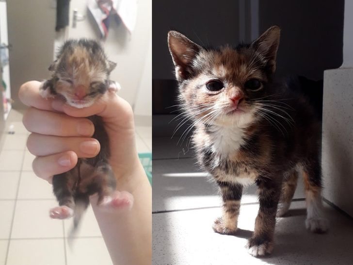 From 2 hours old to 8 weeks old