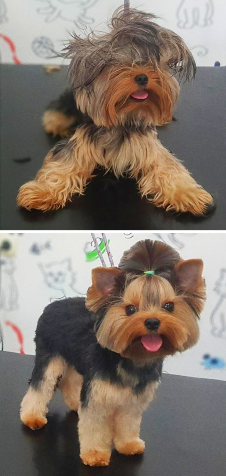 From being Chewbacca to becoming a dog again