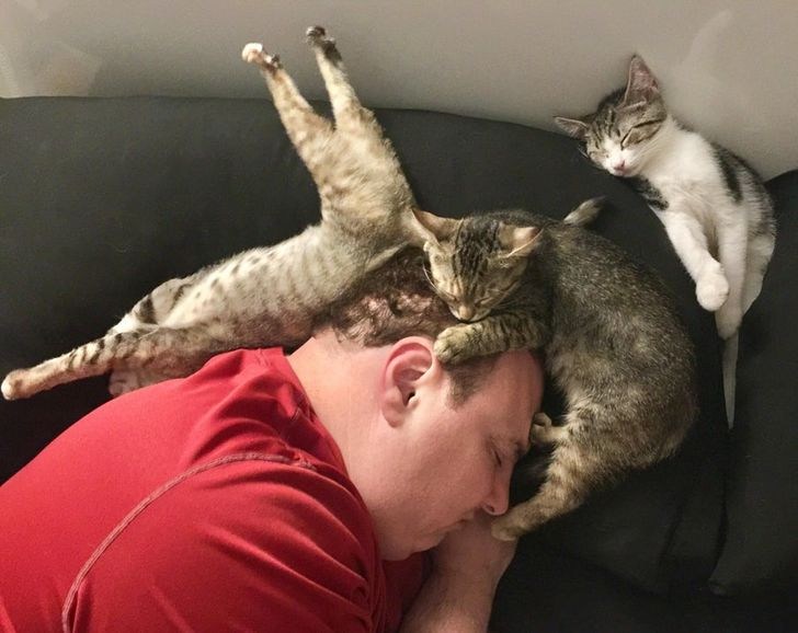 I was reading in bed last night when I realized my husband and our foster kittens were all fast asleep like this