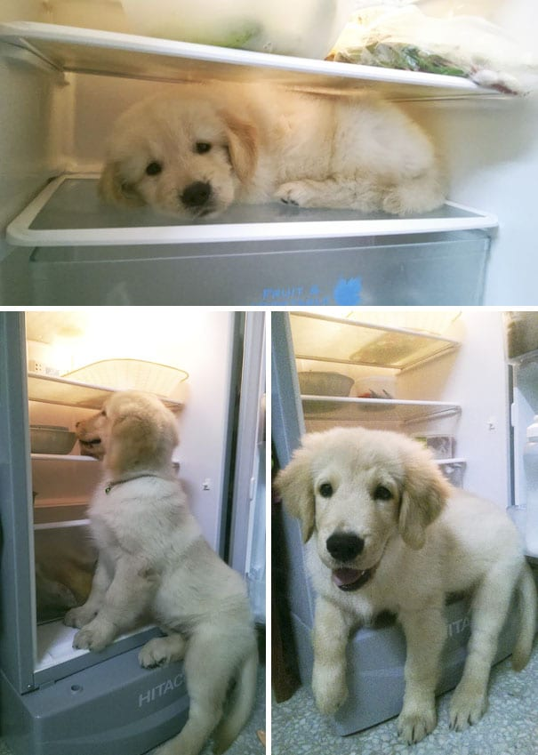 Buy a bigger fridge for the adorable puppy