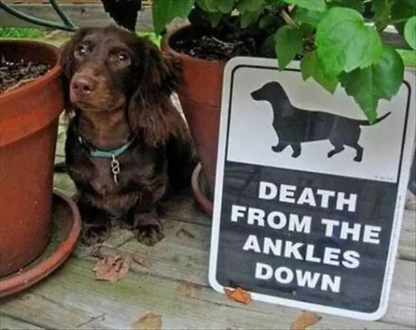 ankles dogs