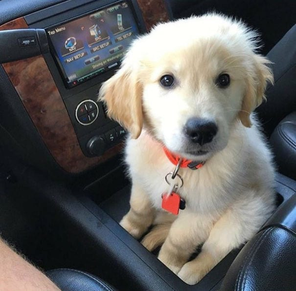 The puppy holder is finally getting used