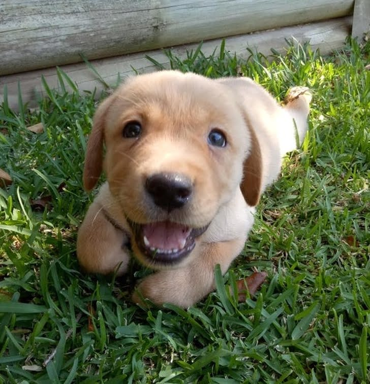 He doesn't know what's going on, but he feels happy because you're happy