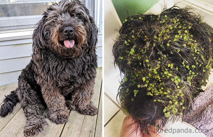 This puffy girl decided to get muddy and go green