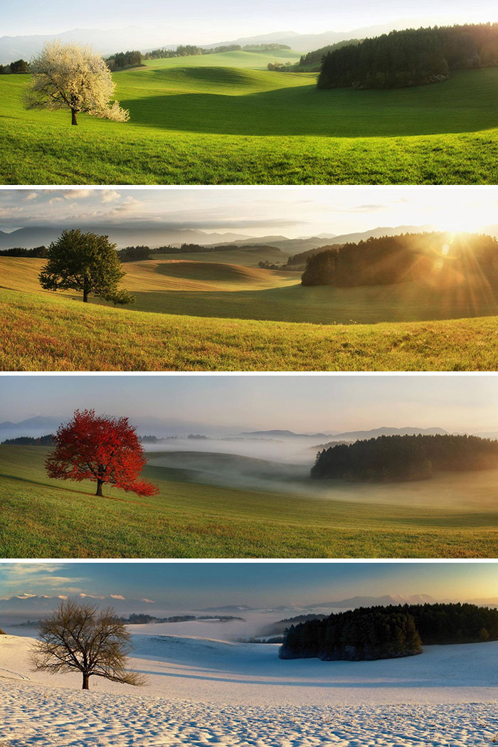 Comparison photos of the same tree in different seasons