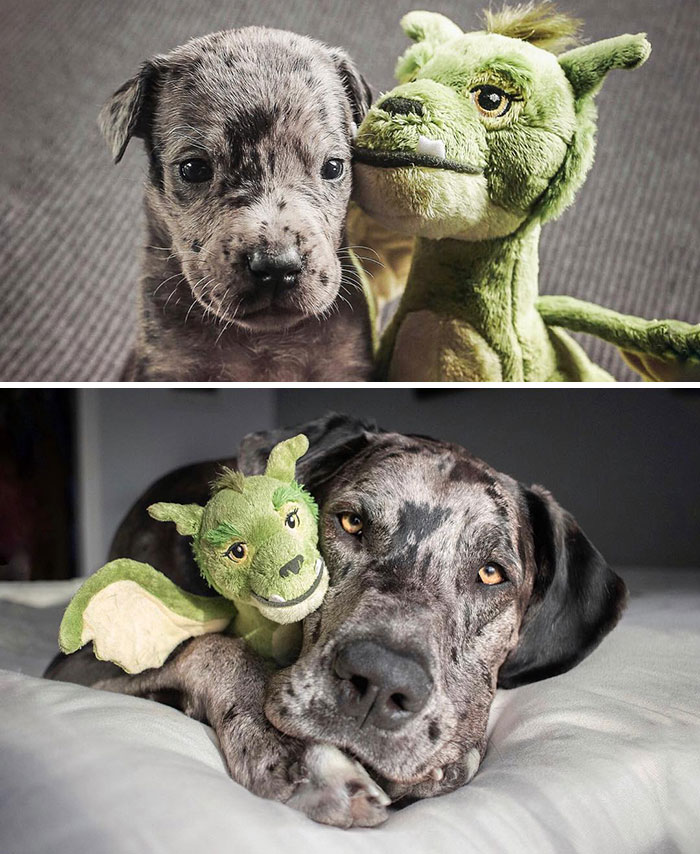 4-weeks vs Fully Grown, with his favorite toy