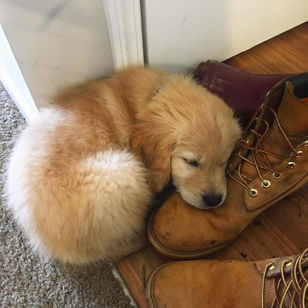 This shoe is the comfiest pillow I've ever used