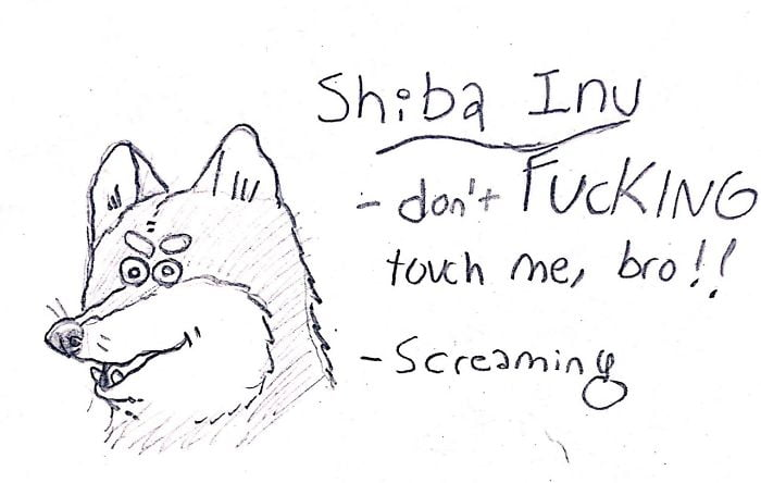 And here I thought Shiba Inu's were gentle and calm