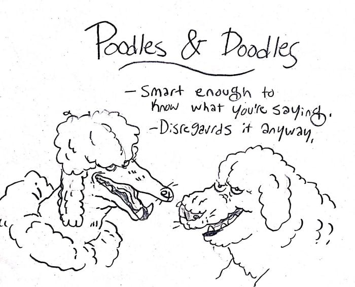 They might be the smartest of all the breeds but that doesn't mean they use it