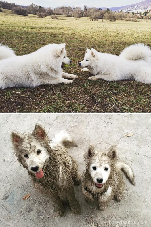 Now two puppies somehow got everything but their face muddy