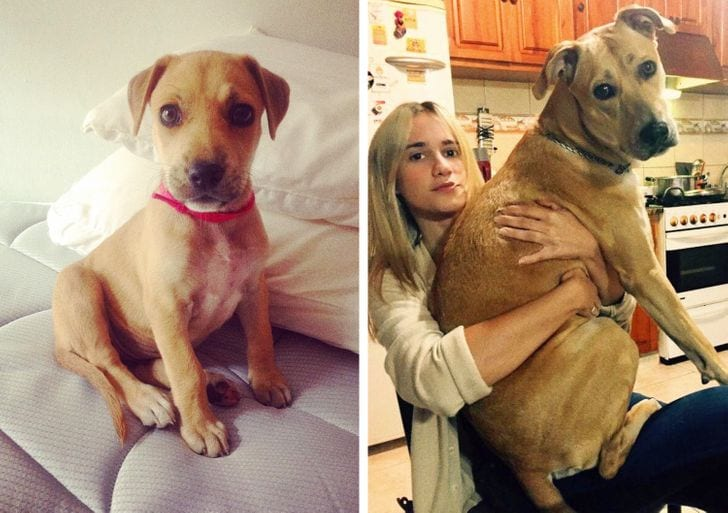 He'll hardly grow, he will always be the size of a puppy,' they told me