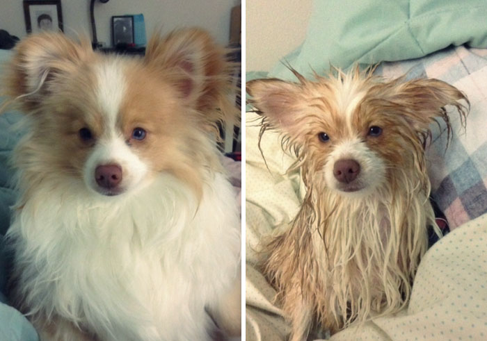 Before Vs. After Bath Pic