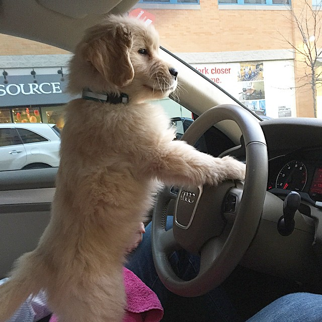 Don't worry dad, I'll drive home. I just need some help with the pedals
