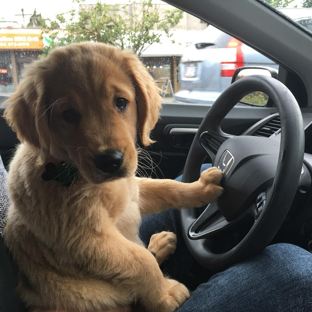 Pup on ride