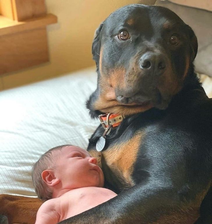 Good morning everyone!! Do you need a baby sitter?? Am here today