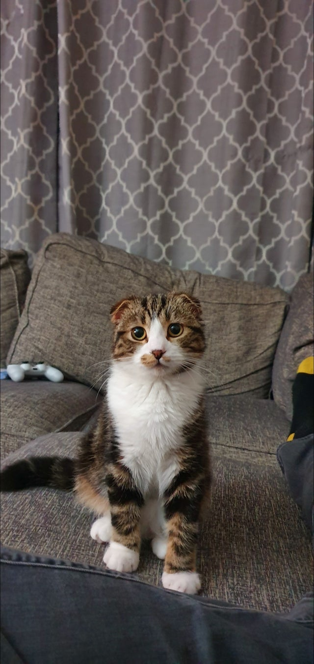 After our cat died, we brought Hugo with us. Now are Family is complete