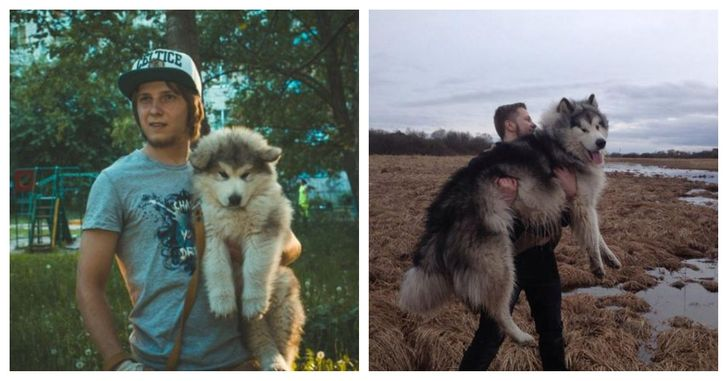 This little puppy turned into a giant furry beast