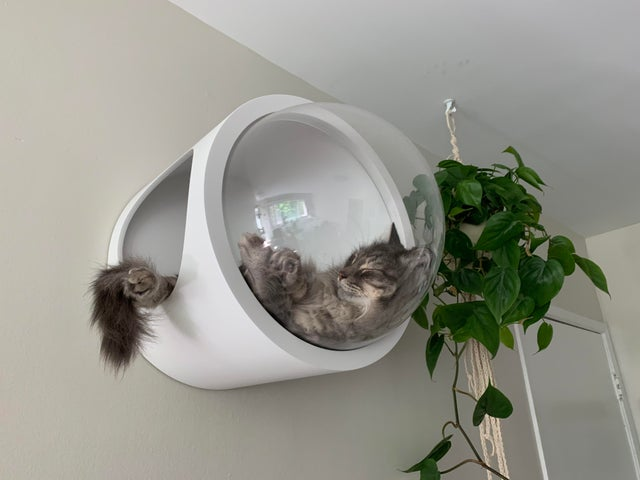 my sweet gary napping in his spaceship