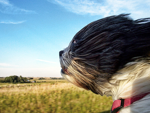Dog Dealing With Wind